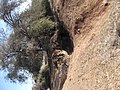 מערות השומרונים - panoramio.jpg