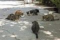 گربه -تهران-cat in iran 11.jpg