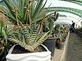 گلخانه کاکتوس دنیای خار در قم. کلکسیون انواع کاکتوس 08.jpg