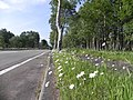 みつまたの道ばた - panoramio.jpg