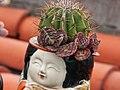 仙人掌 cactus - panoramio.jpg