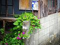 明治牛乳 2014 (14999648207).jpg