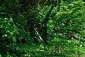矢川緑地 - panoramio (39).jpg