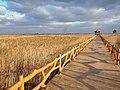 芦苇湿地 - Reed Marsh - 2011.11 - panoramio.jpg