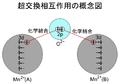 超交換相互作用の概念図.PNG