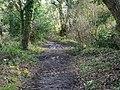 -2021-01-21 Footpath through Bryant's Heath, Felmingham, Norfolk.jpg