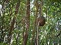 ... ¿ ant's termite's ? nest (33184109186).jpg