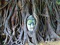 022 Banyan Buddha (9183185414).jpg