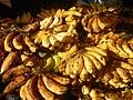 0495Common houseflies eating bananas in the Philippines 24.jpg