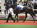 07 Smart Gear (June 23, 2013. 54th Takarazuka Kinen) (9117530652).jpg