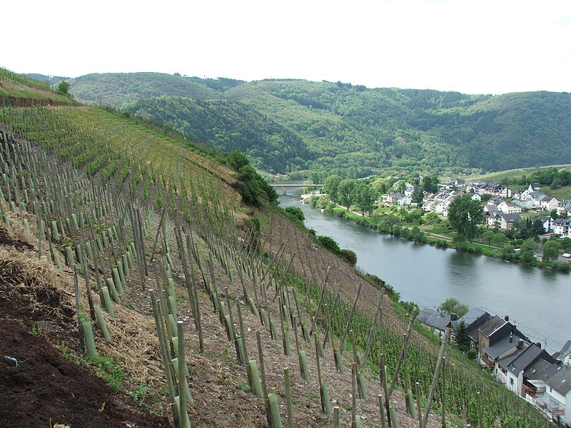 Zell (Mosel), Germany