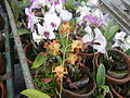 0917jfMaharlika Highway Resorts Orchids Handicrafts San Rafael Bulacanfvf 10.JPG