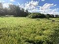 1283.Groningen.Grijpskerk.Nam.GasOpslag.Natuur.Park.NatuurPark.Natuurgebied.Kommerzeil.Planten.jpg