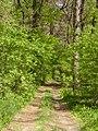 14.05.2006 - територія заказника Чернечий ліс (7).jpg