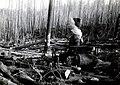 1936. Donkey and partially-prepared spar tree. Tillamook Burn. Interstate Logging Company. (34851945896).jpg