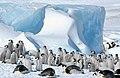 2007 Snow-Hill-Island Luyten-De-Hauwere-Emperor-Penguin-103.jpg