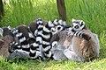 2015-05-24 Vogelpark Marlow 27.jpg