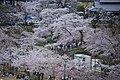 20160403 Himeji-Castle 3364 (26220509214).jpg