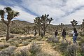 2017 Student Summit on Climate Change - Joshua tree Monitoring Project - Students locate study trees using GPS (33365727081).jpg