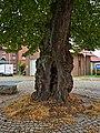 2020-08-09 ND Winterlinde in Nordshausen, Hessen 03.jpg
