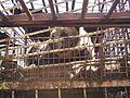 20 Мини-зоопарк в п. Листвянка.jpg