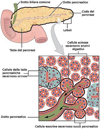 effetti collaterali del plesso plexus sliman