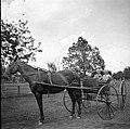2 children in a horse drawn buggy (3380760238).jpg