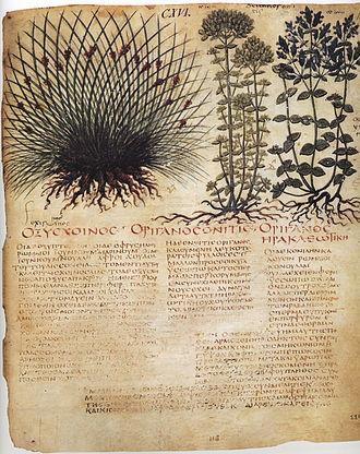 Byzantine illuminated manuscripts - Image: 59 Dioscoride VII sec