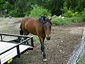 6-19-06 Buddy the Horse.jpg