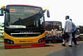 APSRTC Buses at Vizianagaram Bus Complex.jpg
