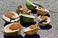 ARUBA-eidechsen-kokos.jpg
