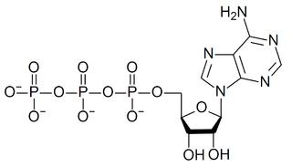 ATP-binding motif