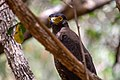 A Bird in Wilpattu National Park 12.jpg