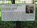 A Silesian Zoological Garden brah 12.JPG