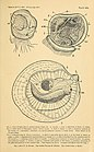 A manual of fish-culture, based on the methods of the United States commission of fish and fisheries (1897) (14761192061).jpg