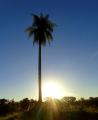 A palmeira e o sol poente.png