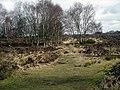 A path across the heath in Sutton Park - geograph.org.uk - 1755126.jpg