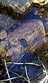 A snail on a rock in Wekusko Falls Provincial Park in Manitoba, Canada. (36356154954).jpg