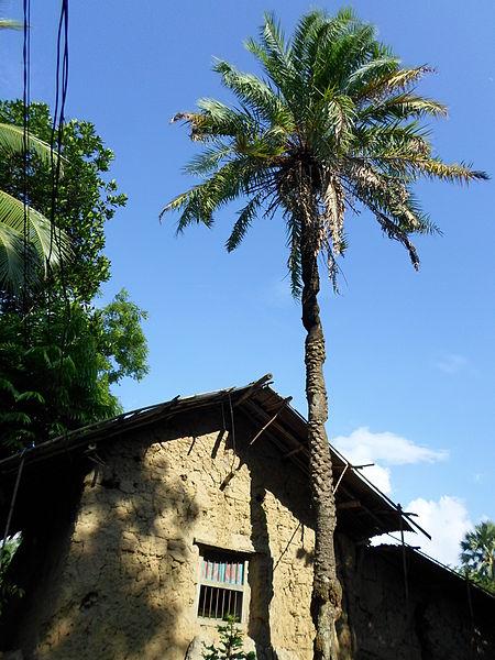 File:A village house.JPG
