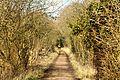 A woodland walk - RSPB Fowlmere (25160188284).jpg