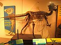 Academy of Natural Sciences, Philadelphia - IMG 7440.JPG