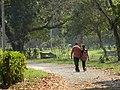Acharya Jagadish Chandra Bose Indian Botanic Garden - Howrah 2011-03-20 2087.JPG
