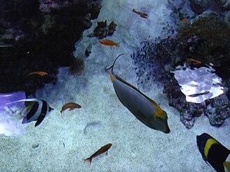 Civic Aquarium of Milan - Image: Acquario Milano 20095