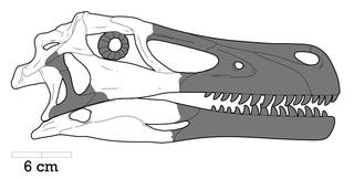 <i>Adasaurus</i> Extinct genus of dinosaurs