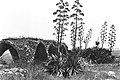 Agave Israel 1955.jpg
