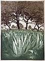 Agaves at Laguna Gloria etching-thumbnail.jpg