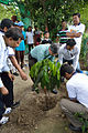 Ajoy Kumar Ray Plants Mahogany - Inaugural Session - Summer Camp - Nisana Foundation - Sibpur BE College Model High School - Howrah 2013-06-07 8708.JPG