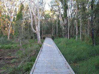 Alexandra Hills, Queensland - Squirrel Glider Conservation Area, 2013