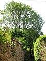 Alleyway east of Elvaston Road (7) - geograph.org.uk - 843480.jpg