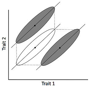 Allometric engineering - Original population is represented in white and novel engineered populations are shown in grey. Allometric shifts will increase the overall variation in one trait relative to the other breaking their typical correlation